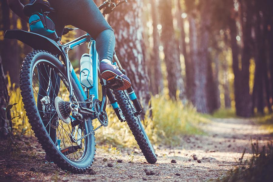vélo-forêt